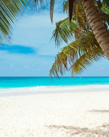 palm trees with a white beach